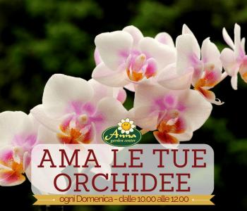 ama le tue orchidee