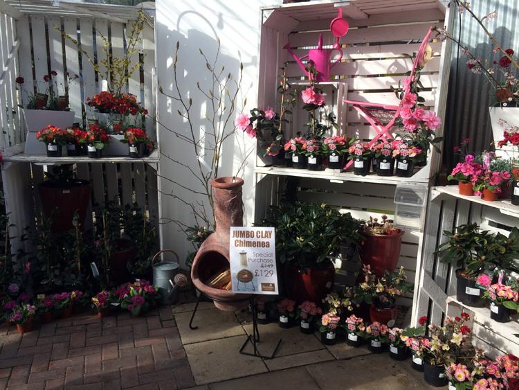 The Garden Centre Blog - Fantastic Plantaria - Ferndale Garden Centre 2