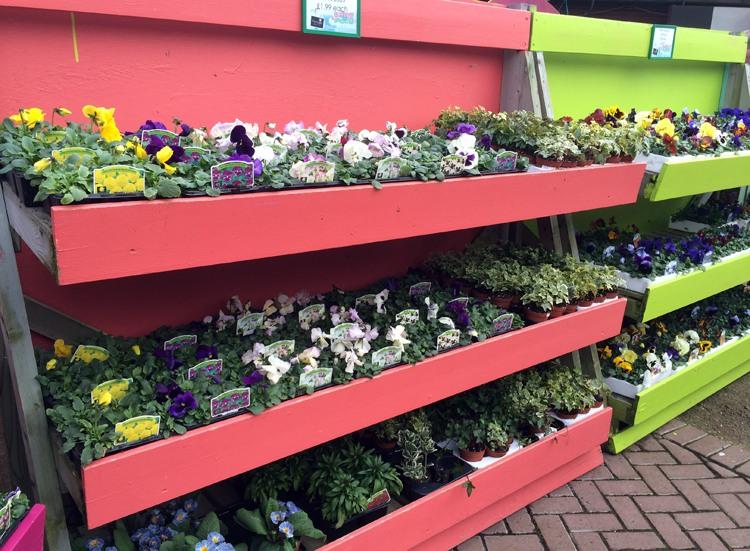 The Garden Centre Blog - Fantastic Plantaria - Ferndale Garden Centre 5