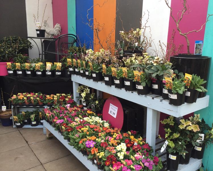 The Garden Centre Blog - Fantastic Plantaria - Ferndale Garden Centre 6