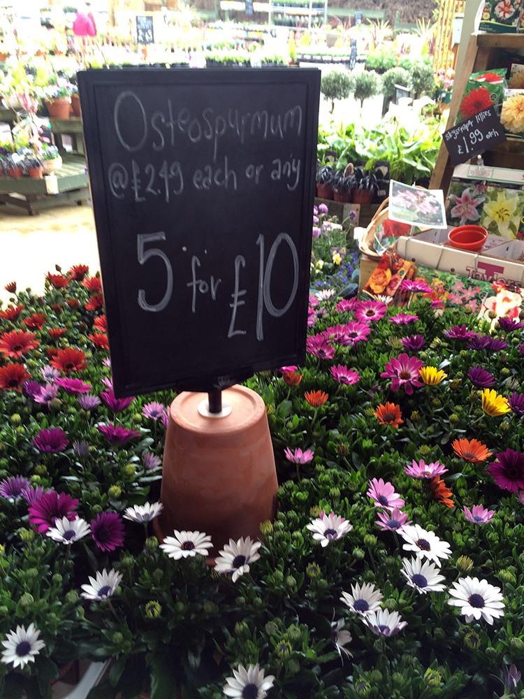 Garden Centre Blog - Timmermans Garden Centre2