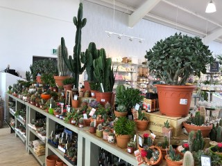 Cacti and succulents reflecting current consumer demand