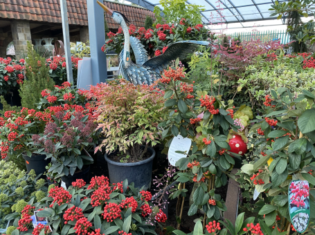 Christmas spreads out into the plantaria