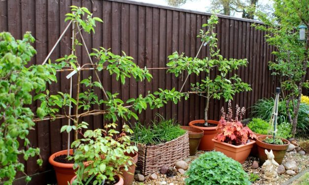 How to Grow an Apple Tree in a Container
