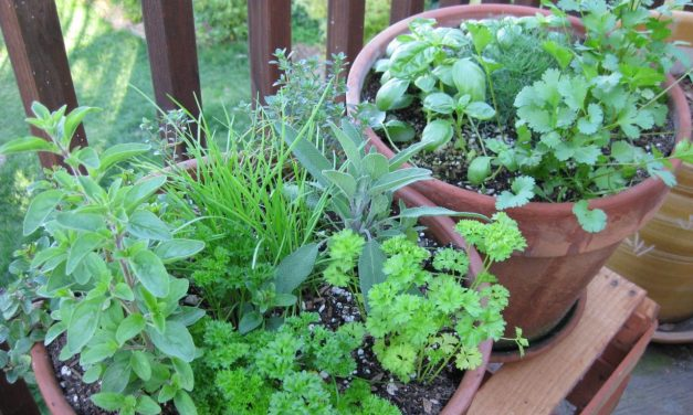 BBQ Herb Garden: Growing Herbs for Grilling