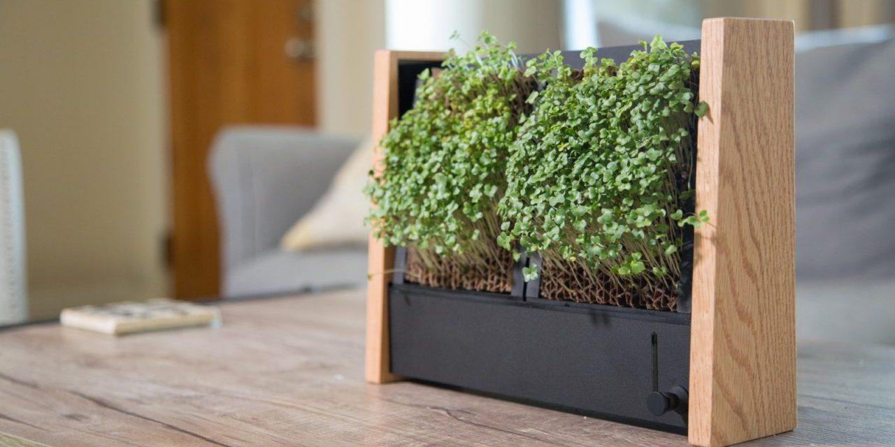 EcoQube Frame: Growing Microgreens the Easy Way