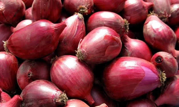 Science Discovers Organic Onions Have More Bioactive Benefits