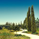 Mediterranean Plants: How to plant and care for them