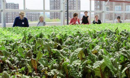 Super Green Rooftop Farm