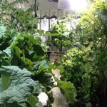 Diary of an Indoor Grower: Hydroponics Garden Evolution