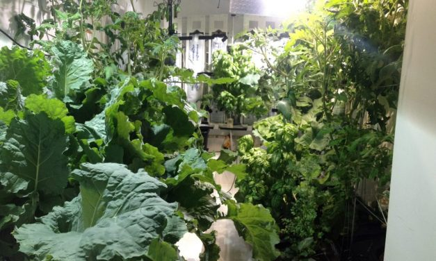 Hydroponics Garden