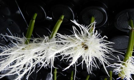 Aeroponic Propagation: Pamper Your Cuttings