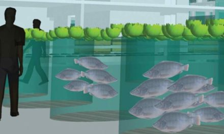 Fighting Hunger with Aquaponics