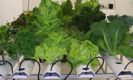 Best 1st Indoor Garden Tips