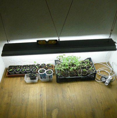 Best Seed Starting Results: Grow Light, Not Windowsill