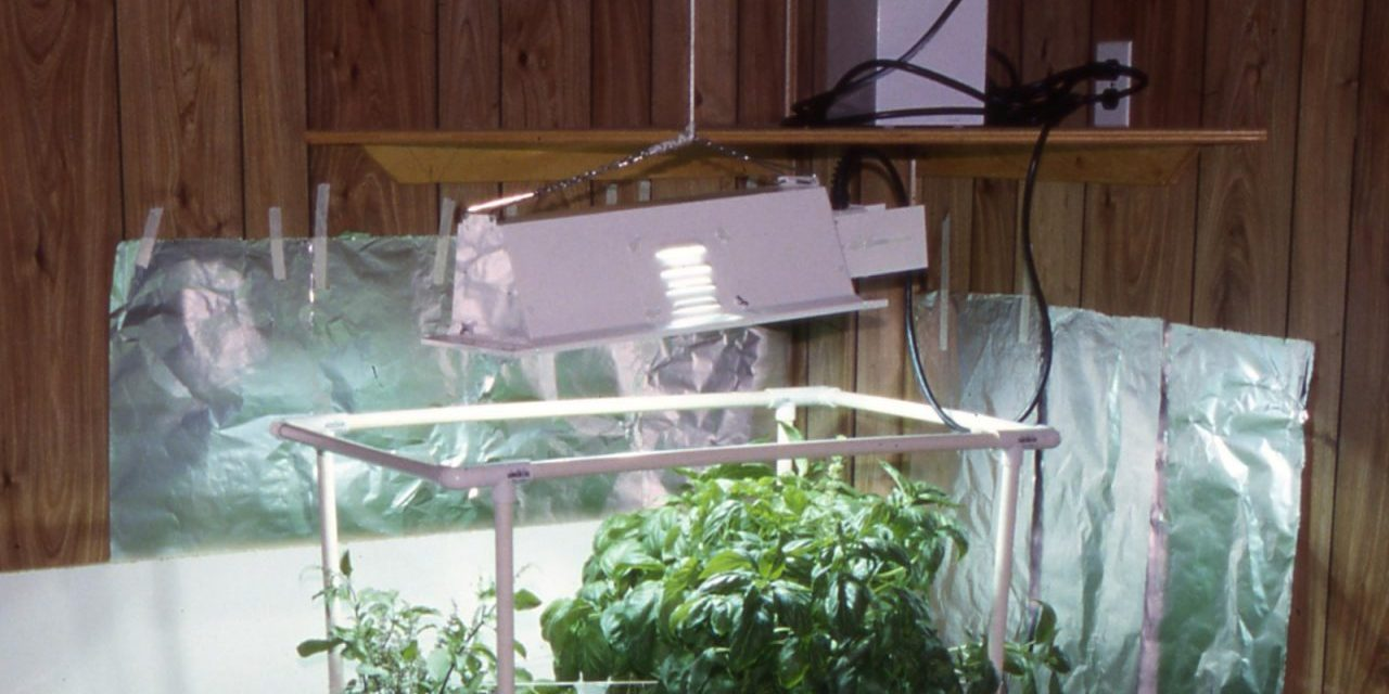 Indoor Garden Lighting Options
