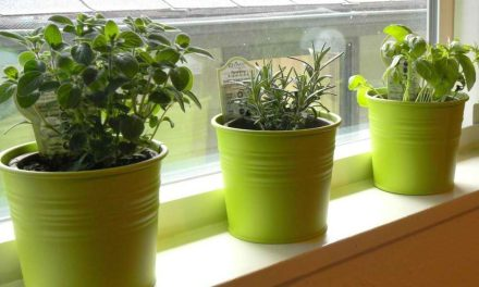 Container Growing Herbs Indoors