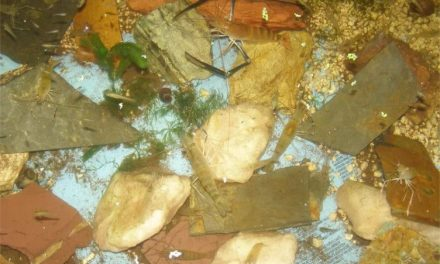 Raising Aquaponic Shrimp in Freshwater