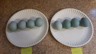 Denim Eggs: First 6 Hours Comparison
