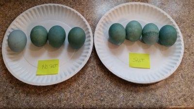 Denim Eggs: Last 4 Hours Comparison