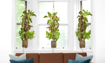 Cool New Hydroponic Garden