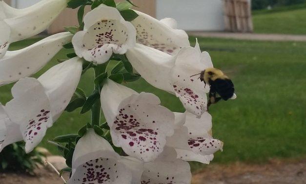 Federal Court Nixes Pesticide