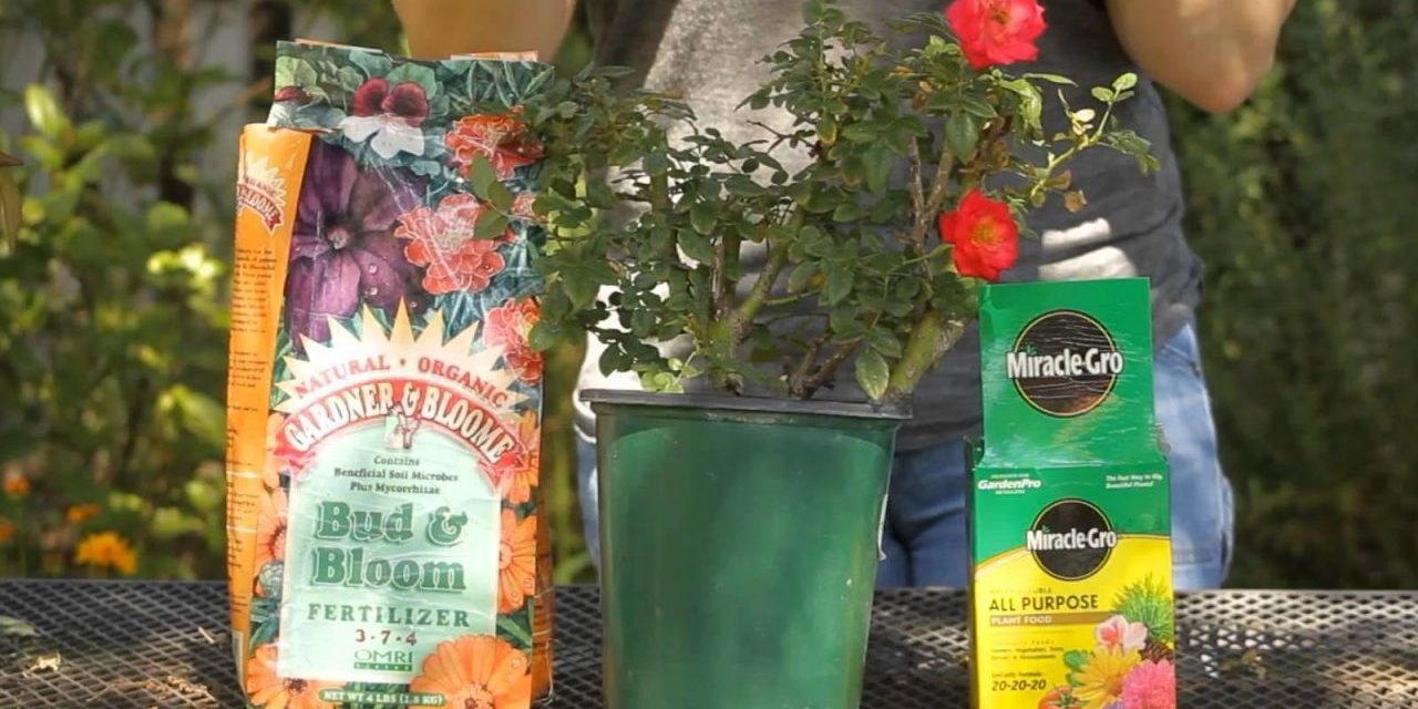 Fertilizer Pollution & Your Garden