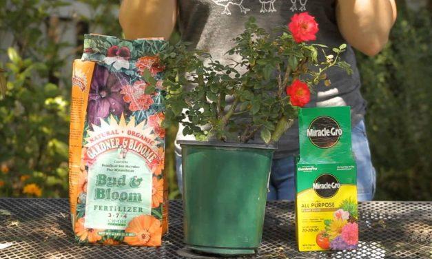 Fertilizer Pollution & Your Garden