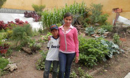 Venezuela's Urban Gardens
