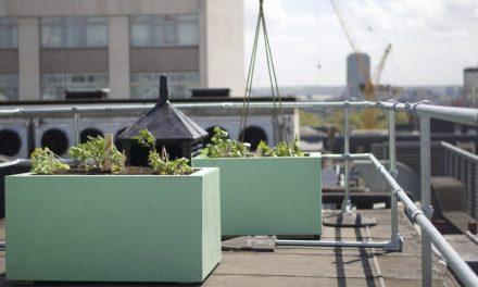 London's Latest Urban Garden