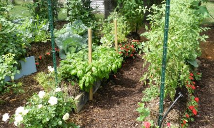 The Benefits of Straw Bale Gardening