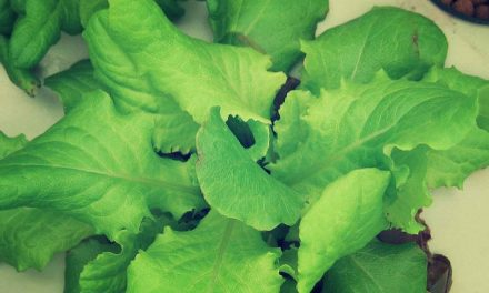 Propagation Planning: An Endless Supply of Lettuce