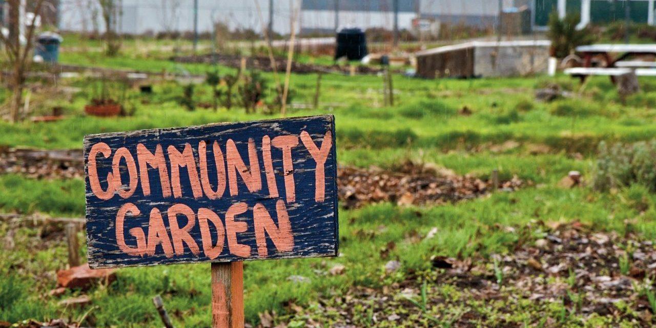 Will Technology Make Community Gardens Obsolete?