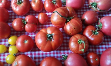 How To Preserve Every Tomato