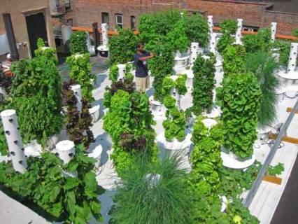 Sustainable Hydroponics Gaining Ground