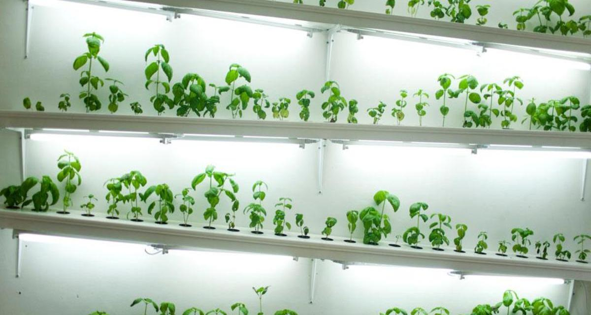Hydroponics For Small Apartments Garden Culture Magazine