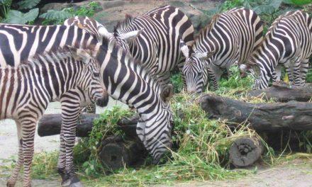 Hydroponics Improve Zoo Nutrition