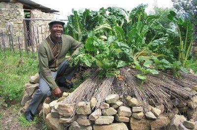 Keyhole Garden: Growing & Composting Combo