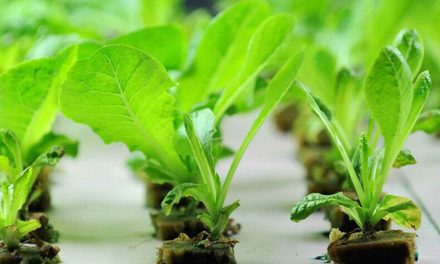 Lessons In Aquaponic Farming