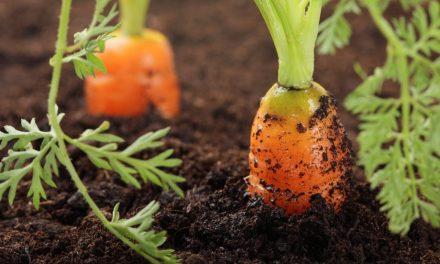Biodynamic Gardening: Perfect Soil Balance