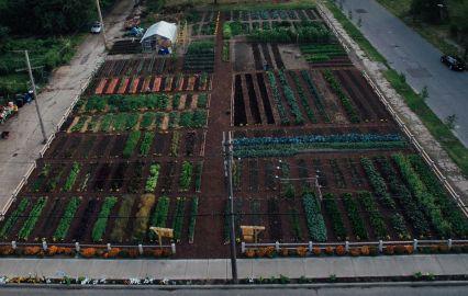 MUFI Crops at Detroit Urban Agrihood