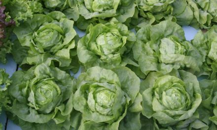 Certified Natural Aquaponic Produce Arrives