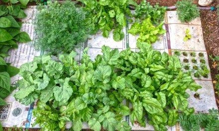 Cultivating Gardeners