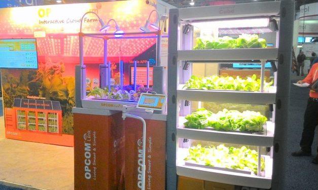 Cloud Farming Comes to Indoor Gardens