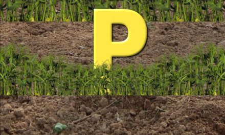 Please Peecycle; Urine The Garden