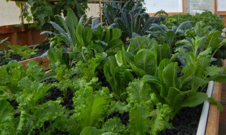 Aquaponic Plant Nutrients