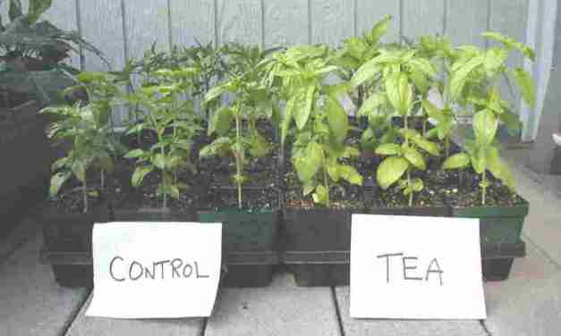 Nutrient Values: Castings vs Guano