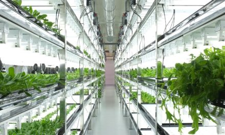 Post-Organic Produce: The Future of Indoor Farming?