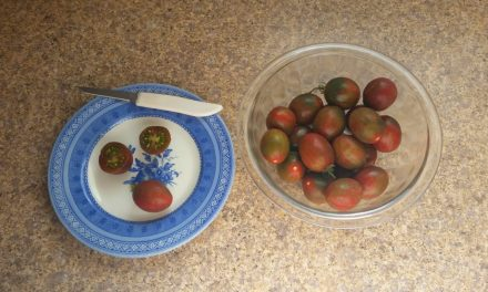5 Awesome Tomato Varieties