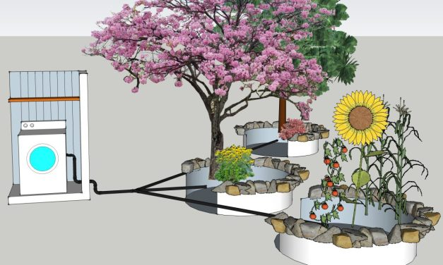 Should You Recycle Greywater for Plants?